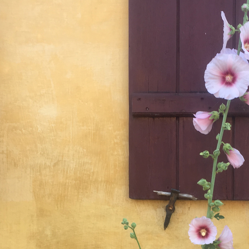 kalket-gul-facade-med-dodenkop-farvet-skodde-og-pink-stokrose